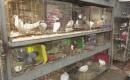 Kerkük Kalesi'nin bitişiğinde tarihi kuş pazarı