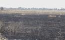 Terör Örgütü DEAŞ Tarım Arazilerinde Çıkan Yangınlarını Üstlendi